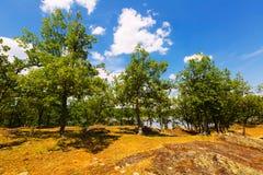 Lato krajobraz z jeziorem i dębami Obrazy Stock