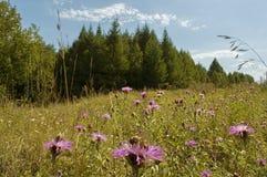 Lato krajobraz z kwiatami Zdjęcie Stock