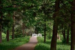 Lato krajobraz z lasem i most w Gatchina parku zdjęcia stock