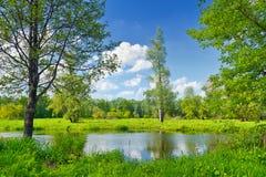 Lato krajobraz z osamotnionym drzewem i niebieskim niebem zdjęcia stock