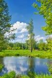 Lato krajobraz z osamotnionym drzewem i niebieskim niebem obrazy royalty free