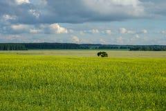 Lato krajobraz z polem, drzewami i chmurami koloru żółtego, Obraz Stock