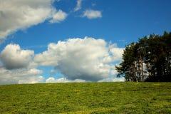 Lato krajobraz zieleni pole pod niebieskim niebem Obraz Stock