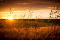 Lato krajobraz: zmierzch nad tłem pole z matą Obraz Royalty Free