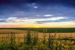 Lato krajobraz: zmierzch nad tłem pole z matą Zdjęcie Royalty Free