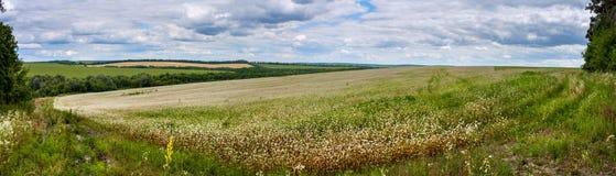 Lato krajobrazowy sztandar, panorama - kwitnąć gryki pole pod niebem Zdjęcia Stock