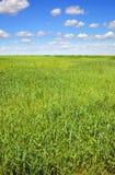 lato krajobrazowy vertical Zdjęcie Stock