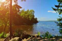 Lato krajobrazowy widok sosna przy wybrzeżem Ochronna zatoka na zatoce Finlandia, Rosja Obrazy Royalty Free