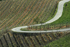 lato krajobrazowy winnica Obraz Royalty Free