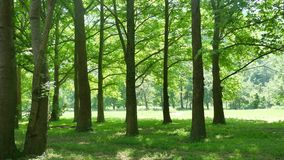 Lato krajobrazu zieleni lasu krajobrazu piękny las Obrazy Royalty Free