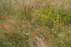 Lato kwiatów dorośnięcie dziki Zdjęcia Royalty Free