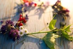 Lato kwiatów i jagod rama dla teksta Obraz Stock