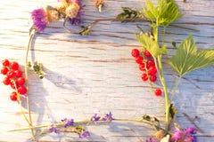 Lato kwiatów i jagod rama dla teksta Zdjęcie Stock