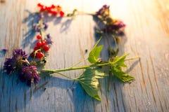 Lato kwiatów i jagod rama dla teksta Fotografia Stock