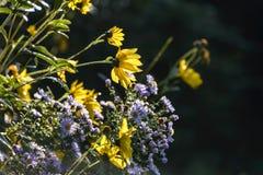 Lato kwiatów okwitnięcie Zdjęcia Stock