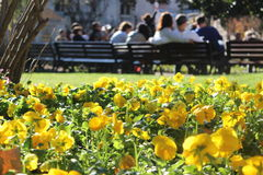 Lato kwiat Obrazy Royalty Free