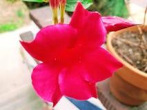Lato kwiat Obraz Stock