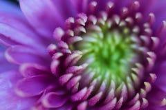 Lato kwiat Makro- liczba 2 zdjęcie royalty free