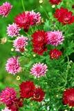 Lato kwiatu łóżko Fotografia Royalty Free