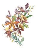 Lato kwiatu rama w akwarela stylu odizolowywającym Imię i nazwisko roślina: Crocosmia, Aquilegia Aquarelle kwiat ilustracja wektor