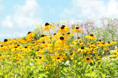 Lato kwiaty Fotografia Royalty Free