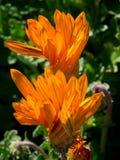 Lato kwiaty obrazy stock