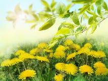 Lato kwiaty i zieleni liście drzewa Obraz Stock