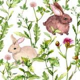 Lato kwiaty, ziele, króliki bezszwowy wzoru akwarela Fotografia Stock