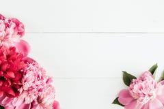 Lato kwiecista rama z różowymi peoniami Zdjęcie Royalty Free