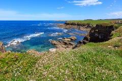 Lato kwitnie Atlantycką linię brzegową & x28; Galicia& x29; Fotografia Royalty Free