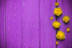 Lato kwitnie na starego purpura drewnianym tle Jaskrawego lata kwiecisty t?o z przestrzeni? dla teksta karciany kolorowy kwiat obraz stock