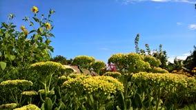 Lato kwitnie pięknego Zdjęcie Royalty Free