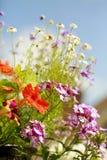 Lato kwitnie w pełnym kwiacie przeciw naturalnemu niebieskiemu niebu Zdjęcia Stock