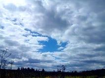 Lato las w całości verdure i piękno Zdjęcia Stock