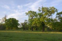 lato lasowy ilustracyjny wektor Zdjęcia Stock