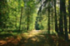 Lato lasu zamazany tło zdjęcie royalty free