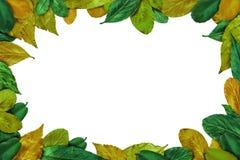 Lato liści rama Obrazy Royalty Free