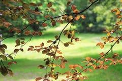 Lato liście, North Yorkshire Obrazy Stock