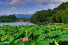Lato lotosowi kwiaty Fotografia Royalty Free