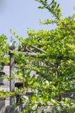 Lato minimo della casa con la scala alta di legno Fotografia Stock Libera da Diritti