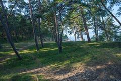 Lato morze bałtyckie Natura, drzewa słońce Podróży fotografia Obraz Royalty Free