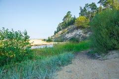 Lato morze bałtyckie Natura, drzewa słońce Podróży fotografia Fotografia Stock