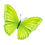 Lato motyl beak dekoracyjnego latającego ilustracyjnego wizerunek swój papierowa kawałka dymówki akwarela Zdjęcia Stock
