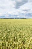 Lato na pszenicznym polu Zdjęcie Stock