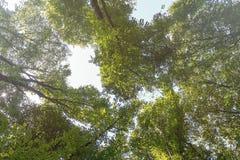 Lato natura, słoneczny dzień Drzewo górne gałąź Obraz Royalty Free