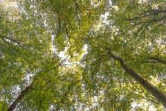 Lato natura, słoneczny dzień Górne gałąź drzewo Z Świeżym Gree Zdjęcie Stock