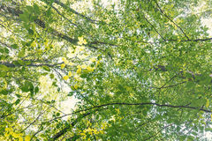 Lato natura, słoneczny dzień Górne gałąź drzewo Z Świeżym Gree Fotografia Royalty Free