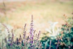 Lato natury tło z dzikimi ziele i kwiatami plenerowymi, zdjęcie royalty free