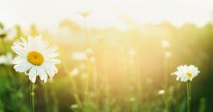 Lato natury tło z podiami i światłem słonecznym, sztandar zdjęcie royalty free