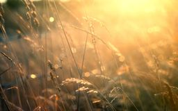 Lato obszar trawiasty z bokeh, plamą i złotym światłem słonecznym, Obraz Stock